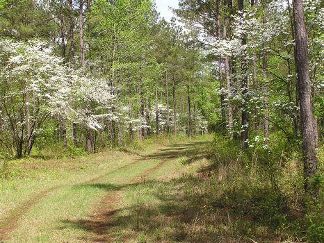 600 Acres near Macon and I-475 : Macon : Crawford County : Georgia