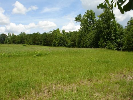 40 Acre Home Site w/Hunting : Wetumpka : Elmore County : Alabama