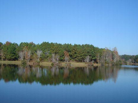 Perfect 450 Acre Hunt Camp : Union Springs : Bullock County : Alabama