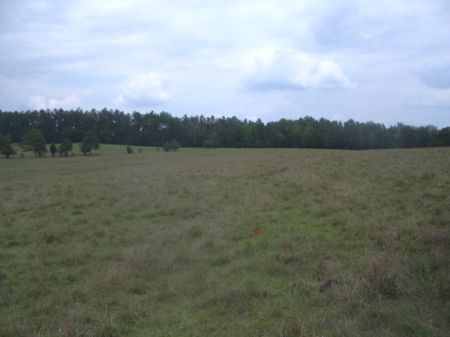 Looking For Pasture? : Crawfordville : Taliaferro County : Georgia