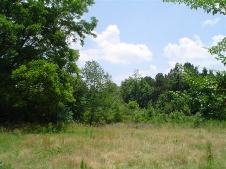 44.5 Acres Of Mixed Mature Hardwood : Weir : Choctaw County : Mississippi