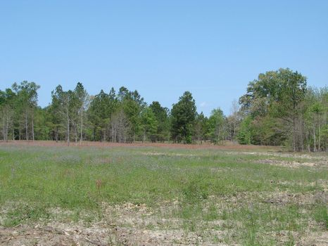 Brier Creek Tract : Wrens : McDuffie County : Georgia