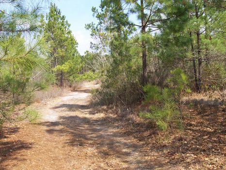 Varnville - 12 Acres (+/-) : Varnville : Hampton County : South Carolina