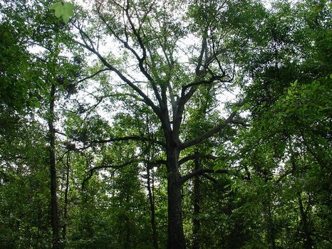 106 Acres : Troy : Pike County : Alabama