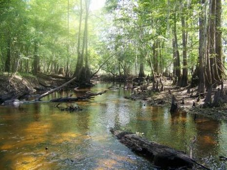 105 Acres @ I-16 & Ohooppee river : Swainsboro : Treutlen County : Georgia