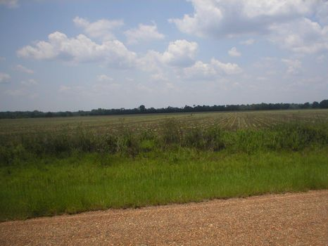 Land for Sale on Pessell Creek Rd : Plains : Sumter County : Georgia