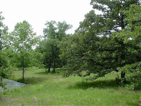 50 Acres With Beautiful Pond : Collins : Saint Clair County : Missouri
