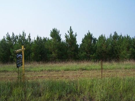 38.64 Acres of Timberland : Americus : Sumter County : Georgia