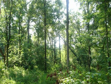 Excellent Hunting Tract : DEVEREAUX : Hancock County : Georgia