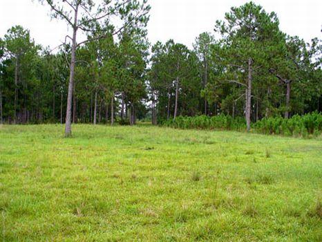Winfield Lane Property : Polk City : Polk County : Florida