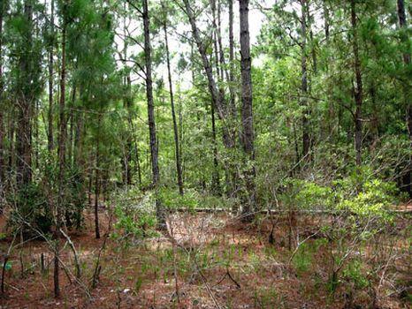 Country World Village Property : Davenport : Polk County : Florida