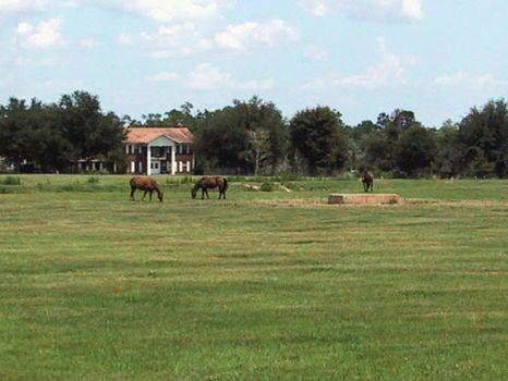 Polk Country Estate : Frostproof : Polk County : Florida