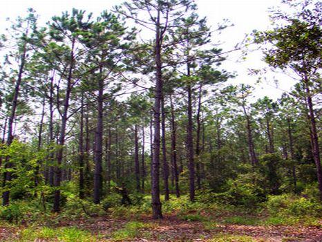 Waldo Investment : Waldo : Alachua County : Florida