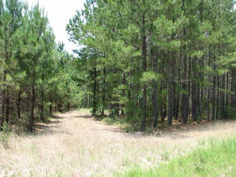 459 Acres : Springfield : Effingham County : Georgia
