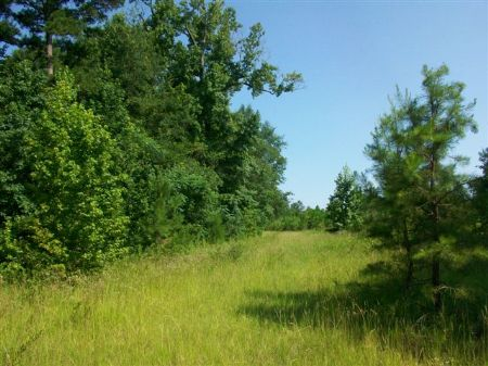188 Acres Trophy Hunting Property : Vienna : Dooly County : Georgia
