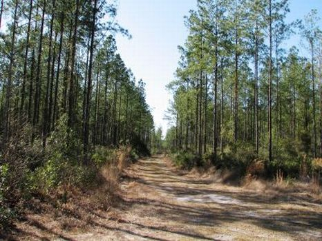 665 Acres : Guyton : Effingham County : Georgia