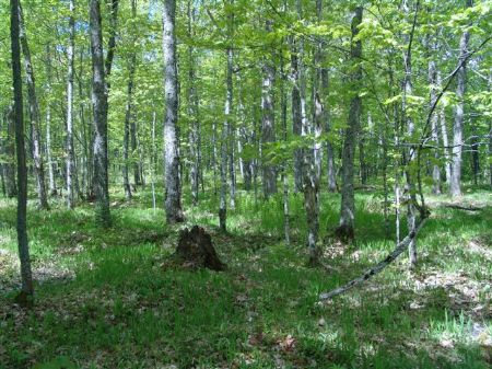 Tbd Net River Rd  Mls #1053708 : Amasa : Iron County : Michigan