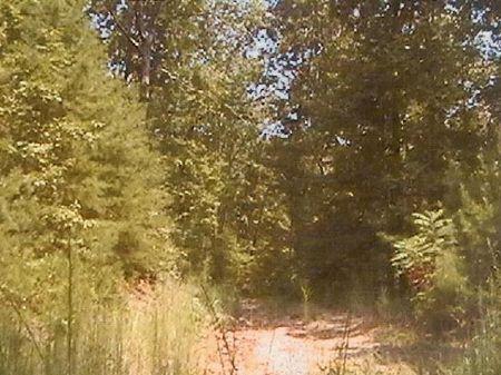 120 Acres : Collinsville : DeKalb County : Alabama