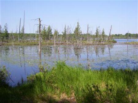 Syers Lake Frontage : Baldwin : Lake County : Michigan