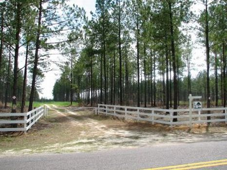 Big Woods Plantation - 770 Acres : Barnwell : Barnwell County : South Carolina