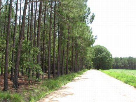 Big Satilla -73 Acres : Alma : Bacon County : Georgia