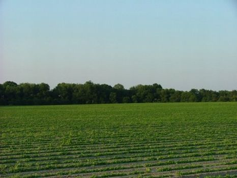 235 Acres : Statesboro : Bulloch County : Georgia