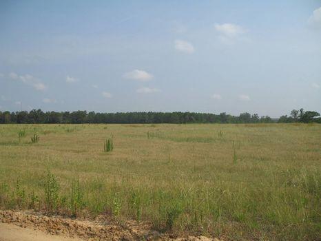 300 Acre Farm : Brantley : Crenshaw County : Alabama