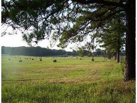 302 Acs Pastureland & Timberland : Kosciusko : Attala County : Mississippi