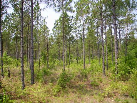 Quiet Country Homesite | 26.3 Acres : Metter : Candler County : Georgia