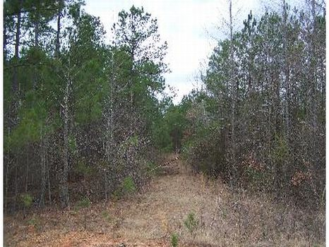 87 Acre Hunting Tract : Kosciusko : Attala County : Mississippi