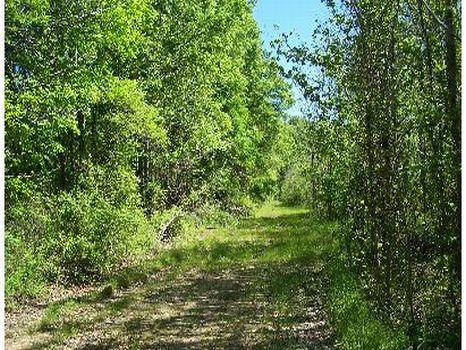 354 Acres on the Yalobusha River : Calhoun City : Calhoun County : Mississippi