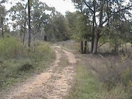 244 Acres of Exc Timber & Hunting : Utica : Copiah County : Mississippi