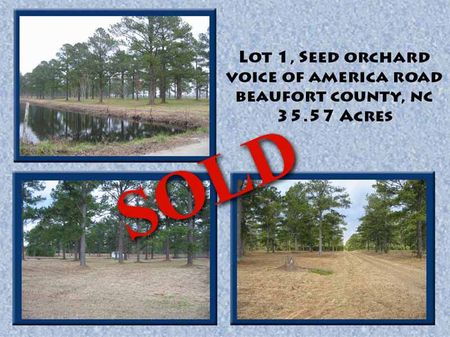 Seed Orchard Lot : Washington : Beaufort County : North Carolina