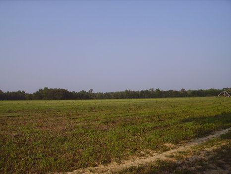 116 Acres : Statesboro : Bulloch County : Georgia