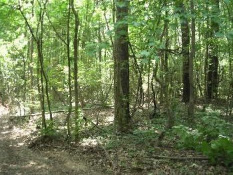 20 Acres : Hazlehurst : Copiah County : Mississippi