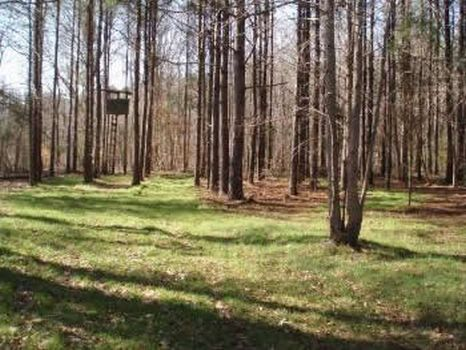 1600 Acres Exc Timber and Hunting : Lexington : Holmes County : Mississippi