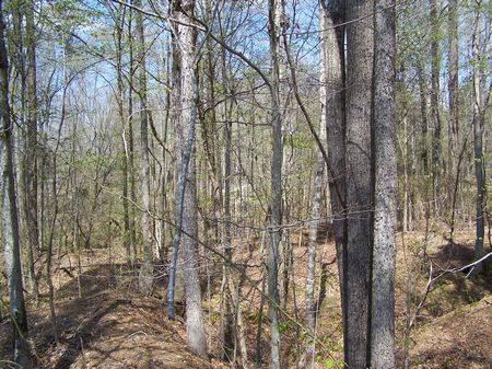 1280 Acres, 56 Ac Lake, Timberland : Lexington : Holmes County : Mississippi