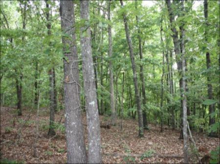 Ac192- 39 Acres Cr 43 : Wadley : Randolph County : Alabama