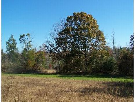 160 Acres - Great Hunting Area : Winona : Montgomery County : Mississippi