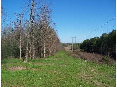 77 Acre Hunting Tract - Dividable : Philadelphia : Neshoba County : Mississippi