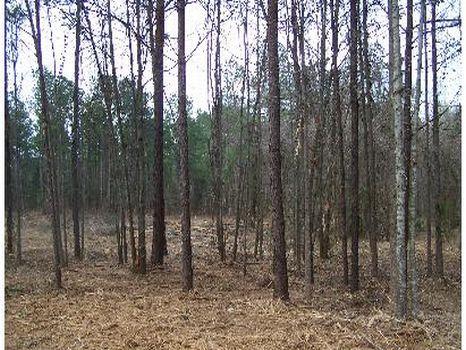 Pretty 50 Acres - Great Homesite : Union : Neshoba County : Mississippi