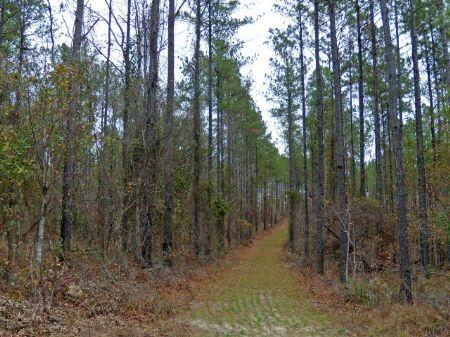 Midsize Hunting Tract With Big Deer : Sandersville : Washington County : Georgia