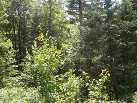 Tbd S. Nestoria Road  Mls #1047455 : Nestoria : Baraga County : Michigan