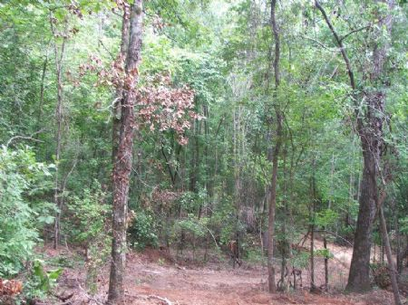 Stonewall Hunting Tract- 120 Acres : Stonewall : Dallas County : Alabama