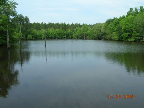 14.6 Acres With Pond : Dublin : Laurens County : Georgia