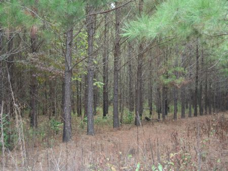Great Hunting Or Investment : Thomastown : Leake County : Mississippi