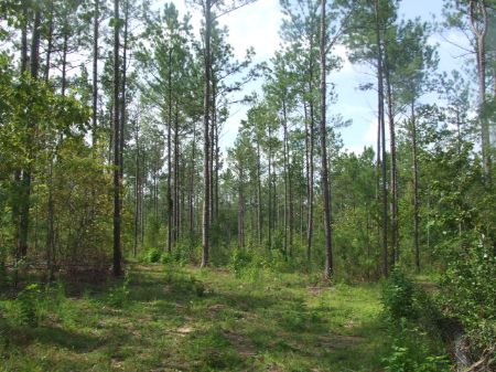 150 Acres Joining National Forest : Brent : Perry County : Alabama