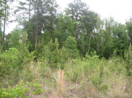 Tract #8927 : Darlington : Darlington County : South Carolina