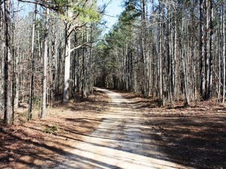 Ac206-29 Acres Cleburne County : Heflin : Cleburne County : Alabama