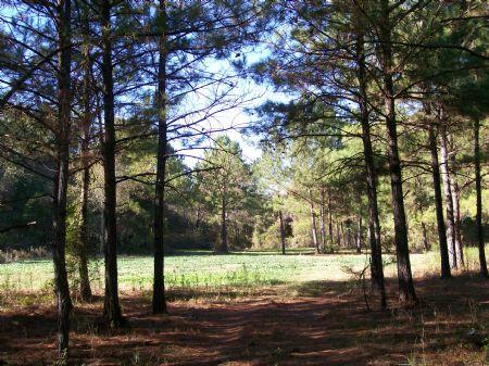 127 Acres : Plains : Sumter County : Georgia